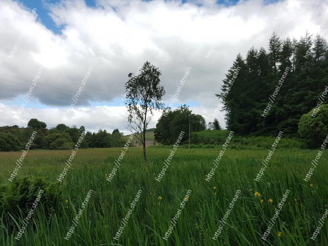 Image of Natural landscape, Grassland, Green, Pasture, Nature, Natural environment, Meadow, Sky, Grass, Tree