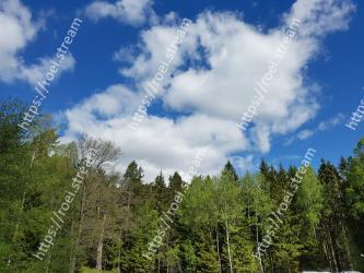 Sky,Natural landscape,Tree,Cloud,Nature,Vegetation,Daytime,Natural environment,Tropical and subtropical coniferous forests,Nature reserve
