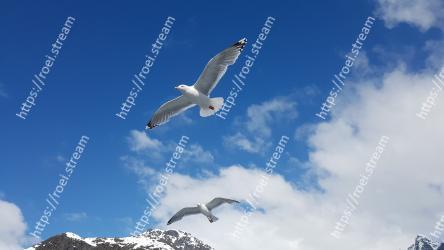 Sky, Bird, Gull, European herring gull, Wing, Seabird, Great black-backed gull, Charadriiformes, Cloud, Flight