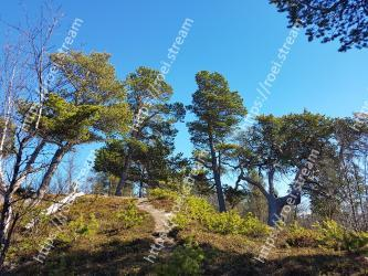 Tree,Natural landscape,Sky,Nature,Vegetation,Wilderness,Natural environment,Nature reserve,Woody plant,Forest