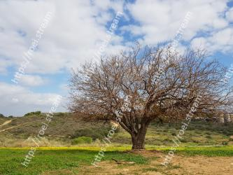 Tree, Natural landscape, Sky, Woody plant, Plant, Grass, Branch, Spring, Cloud, Pasture