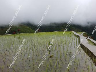 Paddy field,Atmospheric phenomenon,Hill station,Highland,Grass family,Mountain,Landscape,Mist,Rural area,Reflection