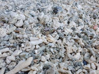 Rock, Gravel, Soil, Rubble, Geology, Sand