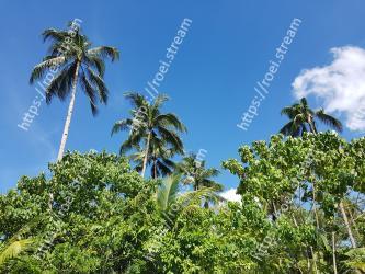 Vegetation, Tree, Sky, Palm tree, Daytime, Arecales, Woody plant, Tropics, Plant, Botany