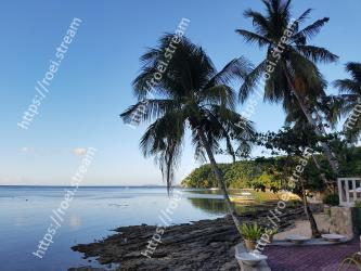 Tree,Sky,Tropics,Palm tree,Arecales,Sea,Shore,Woody plant,Vacation,Morning