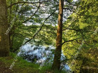 Tree,Natural landscape,Nature,Natural environment,Nature reserve,Forest,Water,Vegetation,Woodland,Green