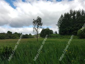 Natural landscape, Grassland, Green, Pasture, Nature, Natural environment, Meadow, Sky, Grass, Tree