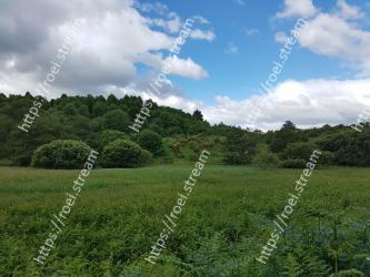 Natural landscape, Grassland, Vegetation, Nature, Green, Pasture, Natural environment, Sky, Grass, Meadow