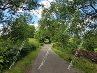 Natural landscape,Tree,Vegetation,Nature,Nature reserve,Trail,Road,Natural environment,Thoroughfare,Lane