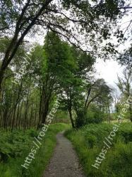 Tree, Vegetation, Nature, Green, Nature reserve, Natural environment, Natural landscape, Branch, Forest, Woody plant