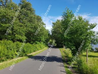 Tree,Road,Woody plant,Plant,Lane,Thoroughfare,Grass,Spring,Shrub,Leaf