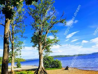 Tree, Nature, Sky, Natural landscape, Blue, Shore, Woody plant, Sea, Plant, Nature reserve