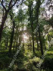 Tree,Nature,Forest,Natural environment,Vegetation,Green,Natural landscape,Old-growth forest,Nature reserve,Branch