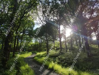 Natural landscape,Tree,Nature,Forest,Natural environment,Woodland,Vegetation,Nature reserve,Sunlight,Green