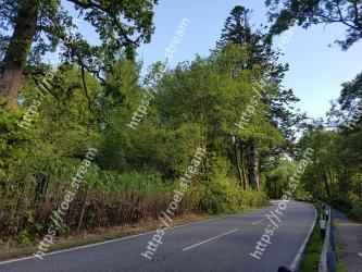 Road, Tree, Natural landscape, Vegetation, Lane, Nature reserve, Thoroughfare, Natural environment, Woody plant, Asphalt