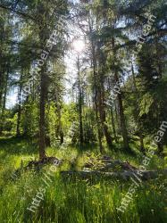 Tree,Nature,Natural environment,Forest,Green,Vegetation,Old-growth forest,Nature reserve,Woody plant,Northern hardwood forest