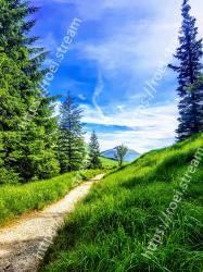 Nature,Sky,Natural landscape,Green,Tree,Natural environment,Wilderness,Blue,Grass,Vegetation