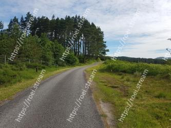 Road,Natural landscape,Tree,Natural environment,Sky,Wilderness,Dirt road,Thoroughfare,Highland,Grass