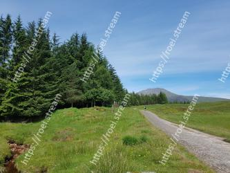Natural landscape,Nature,Tree,Natural environment,Wilderness,Highland,Grassland,Mountainous landforms,Vegetation,Road