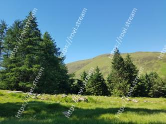 Natural landscape,Tree,Mountainous landforms,Nature,Natural environment,Wilderness,Mountain,Sky,Meadow,Grassland