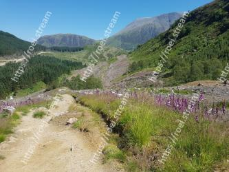 Mountainous landforms,Mountain,Vegetation,Wilderness,Trail,Highland,Wildflower,Grass,Dirt road,Hill