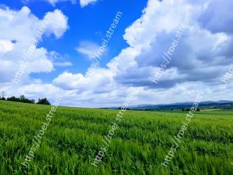 Sky,Grassland,Natural landscape,Field,Green,Nature,Paddy field,Pasture,Cloud,Natural environment