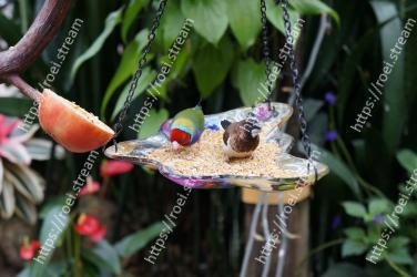 Flower,Plant,Botany,Organism,Bird feeder,Hummingbird,Anthurium