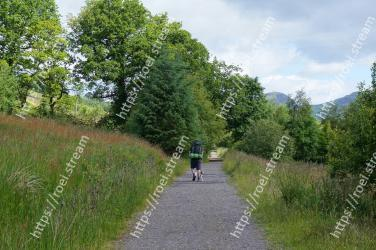 Natural landscape,Trail,Tree,Nature reserve,Road,Thoroughfare,Biome,Grass family,Grass,Path