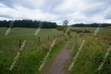 Pasture, Grassland, Natural landscape, Natural environment, Meadow, Land lot, Dirt road, Field, Grass, Rural area