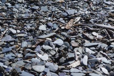 Rock, Rubble, Gravel, Bedrock, Plant