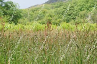 Vegetation, Grass, Prairie, Grassland, Natural environment, Plant, Phragmites, Nature reserve, Meadow, Grass family