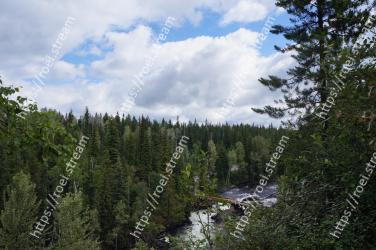 Nature,Nature reserve,Tree,Tropical and subtropical coniferous forests,Natural environment,Wilderness,Natural landscape,Forest,Vegetation,Biome