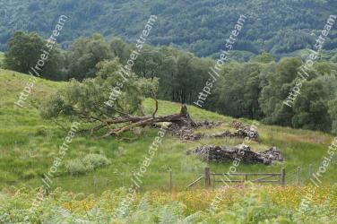 Vegetation, Natural landscape, Grassland, Nature reserve, Natural environment, Wilderness, Meadow, Grass, Hill, Pasture