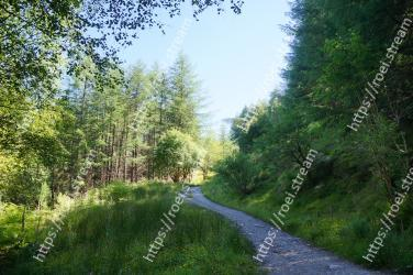 Natural landscape,Tree,Nature,Vegetation,Nature reserve,Natural environment,Green,Road,Forest,Trail