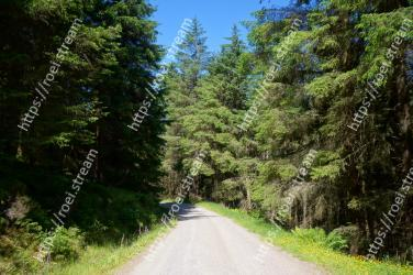 Tree,Natural landscape,Vegetation,Nature,Road,Natural environment,Tropical and subtropical coniferous forests,Forest,Nature reserve,Biome