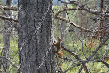 Tree, Squirrel, Branch, Wildlife, Eurasian Red Squirrel, Fox squirrel, Plant, Trunk, Woody plant, Organism
