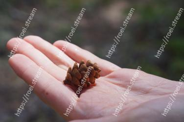 Hand, Conifer cone, Plant, Soil, Finger