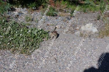 Grass, Plant, Groundcover, Grass family, Subshrub, Gravel, Soil, Chipmunk, Rock