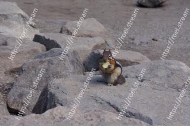 Chipmunk, Squirrel, Rock, Fawn, Rodent
