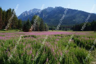 Natural landscape,Wilderness,Nature,Meadow,Natural environment,Flower,Grassland,Lavender,Mountainous landforms,Plant