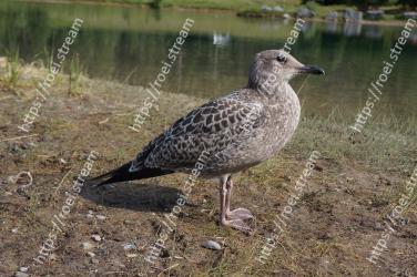 Bird, Vertebrate, Beak, Seabird, Charadriiformes, Shorebird, Adaptation, Gull, Wildlife, Water bird