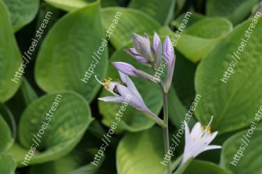 Flower,Leaf,Plant,Flowering plant,Botany,Organism,Terrestrial plant,Wildflower,Petal,Lily family