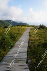 Boardwalk, Walkway, Natural landscape, Sky, Grass, Natural environment, Path, Nature reserve, Wilderness, Highland