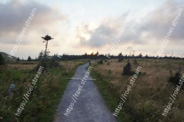 Sky,Cloud,Road,Tree,Dirt road,Horizon,Grass,Rural area,Infrastructure,Plain