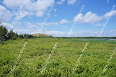 Grassland, Vegetation, Natural landscape, Natural environment, Pasture, Green, Nature reserve, Sky, Grass, Meadow