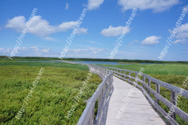 Natural landscape, Boardwalk, Grassland, Natural environment, Nature reserve, Green, Walkway, Vegetation, Grass, Water resources
