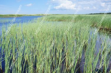 Vegetation, Grass, Natural environment, Freshwater marsh, Fen, Natural landscape, Plant, Marsh, Prairie, Nature reserve