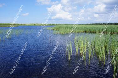 Natural landscape, Freshwater marsh, Marsh, Natural environment, Water resources, Nature, Water, Nature reserve, Vegetation, Wetland