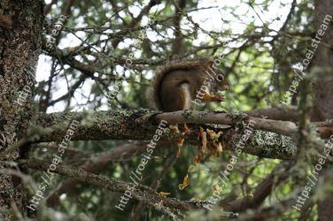 Squirrel, Wildlife, Tree, Branch, Fox squirrel, Eurasian Red Squirrel, Plant, Trunk, Terrestrial animal, Woody plant