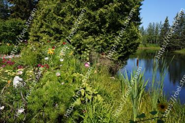 Natural landscape,Vegetation,Nature,Nature reserve,Natural environment,Plant,Pond,Tree,Flower,Bank